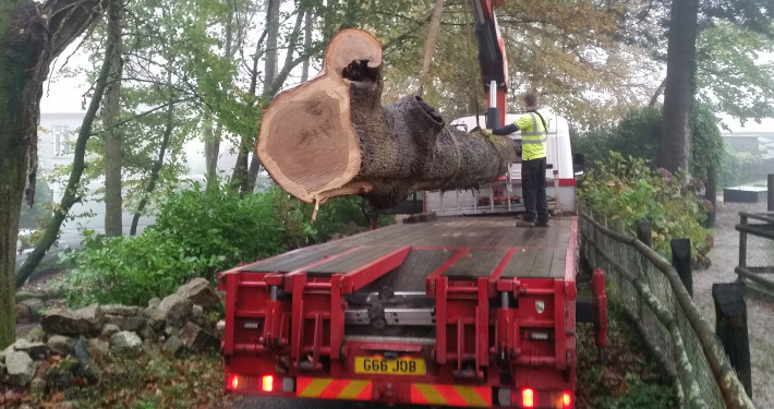 Cornish Sessile Recovered Oak